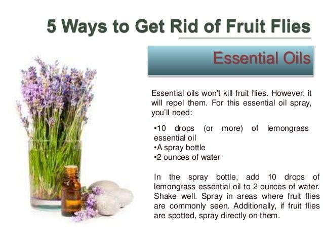 Natural Way To Get Rid Of Flies