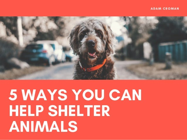 5 WAYS YOU CAN HELP SHELTER ANIMALS ADAM CROMAN