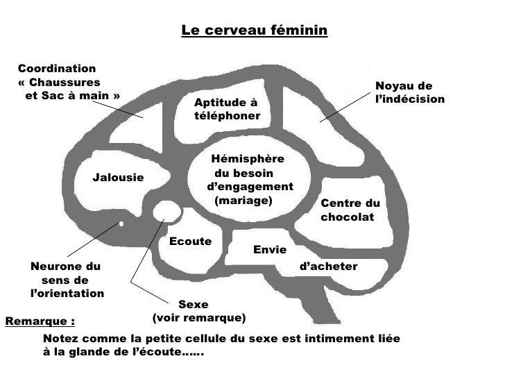 Le cerveau féminin Aptitude à téléphoner Noyau de l'indécision Hémisphère du besoin d'engagement (mariage) Coordination «...