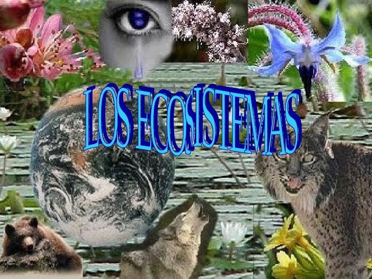 1.¿Qué es un ecosistema?•   Un ecosistema es el conjunto    formado por los seres vivos,    los factores físicos del medio...