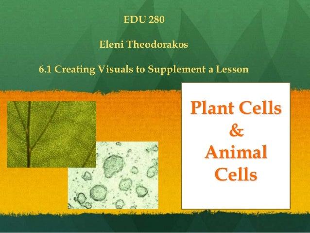 Plant Cells & Animal Cells EDU 280 Eleni Theodorakos 6.1 Creating Visuals to Supplement a Lesson