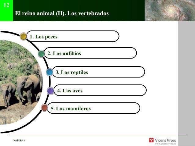 NATURA 1NATURA 1 El reino animal (II). Los vertebrados 5. Los mamíferos 4. Las aves 3. Los reptiles 2. Los anfibios 1. Los...