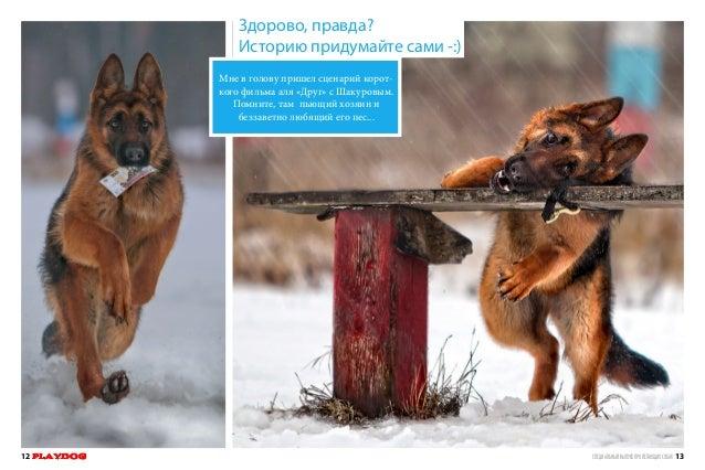 Playthedog