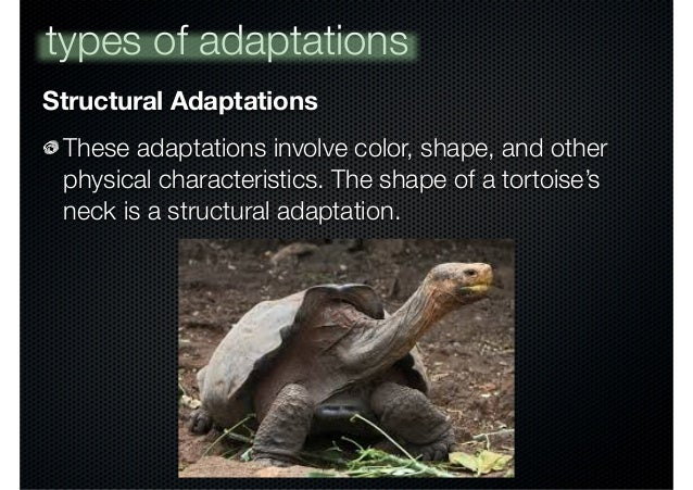 example of functional adaptation in animals