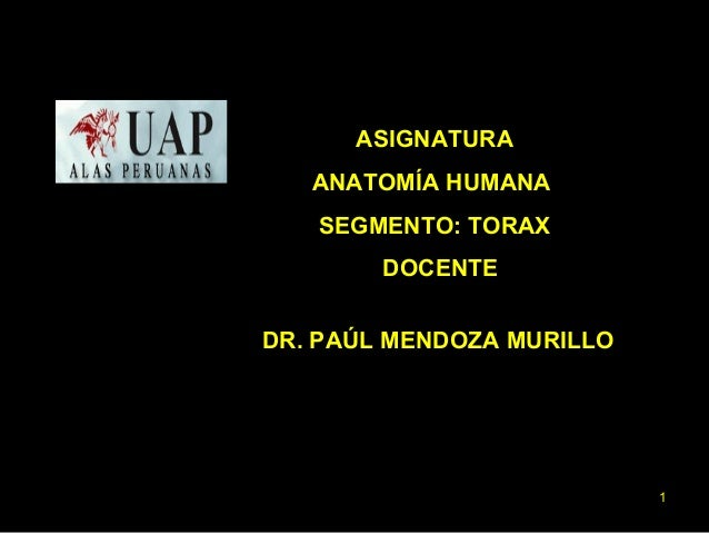 ASIGNATURA  ANATOMÍA HUMANA  SEGMENTO: TORAX  DOCENTE  DR. PAÚL MENDOZA MURILLO  1