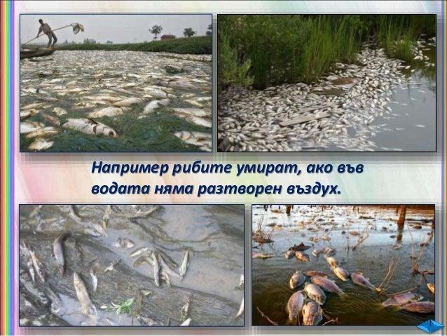 Солената вода от океаните и моретата не може да се използва нито за пиене, нито за напояване. защото в нея е разтворено го...