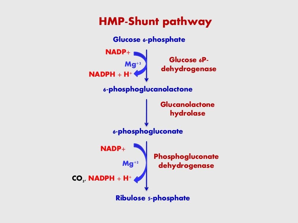 HMP SHUNT PATHWAY page 12