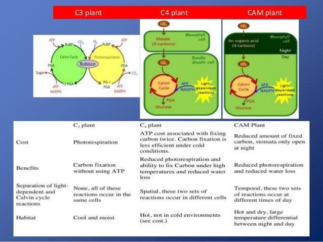 Biology Lecture - Photosynthesis