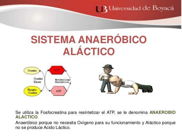 SISTEMA ANAEROBICO ALACTICO DOWNLOAD