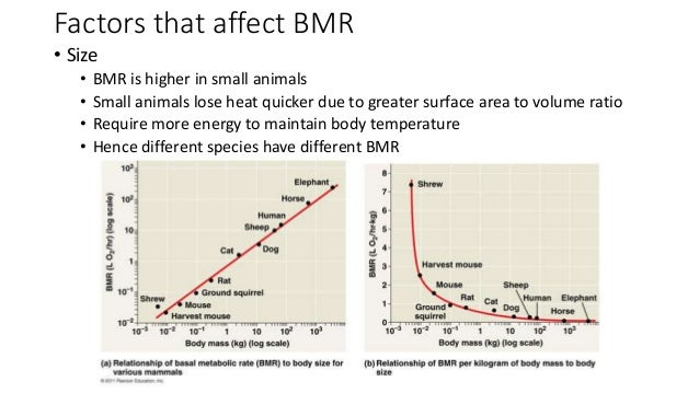 relationship between basal metabolic rate body mass and surface area