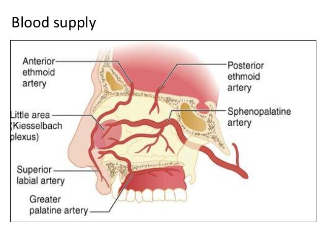 Nerve supply Innervation of the nasal cavityInnervation of the external nose