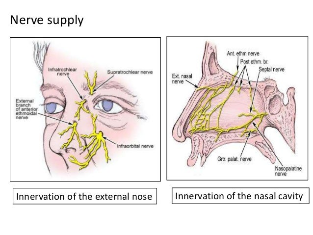 BIOMECHANICS OF NASAL FRACTURES Nasal fractures occur in one of two main patterns-  From a lateral impact  From a head-o...
