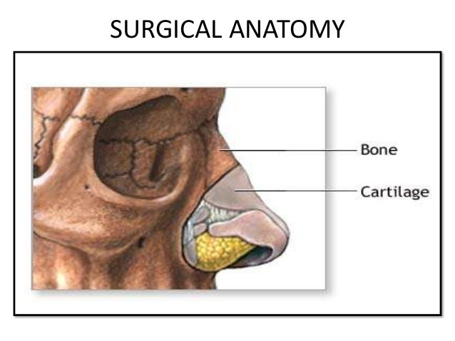 The nose External nose Bony part Carilagenous part Nasal cavity Floor Roof Lateral wall Medial (septal) wall
