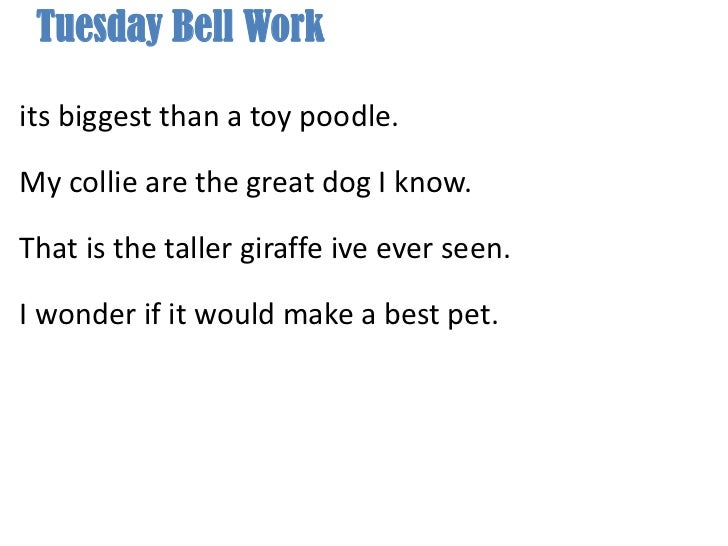Tuesday Bell Work <br />its biggest than a toy poodle.<br />My collie are the great dog I know.<br />That is the taller gi...