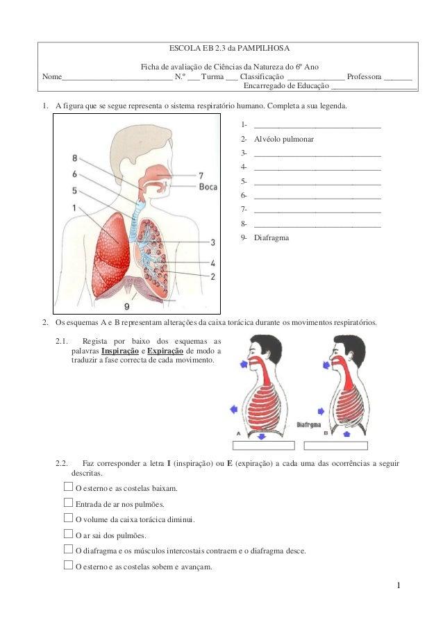 ESCOLA EB 2.3 da PAMPILHOSA                       Ficha de avaliação de Ciências da Natureza do 6º AnoNome________________...