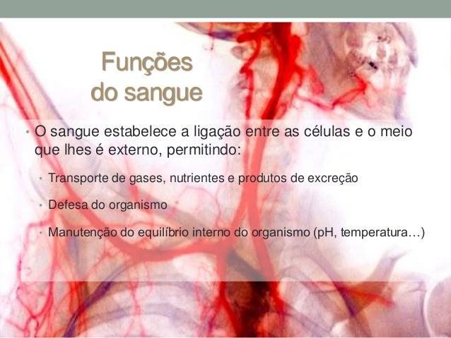 CN9-constituintes do sangue Slide 2