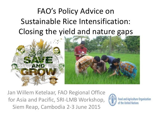 FAO's Policy Advice on Sustainable Rice Intensification: Closing the yield and nature gaps Jan Willem Ketelaar, FAO Region...