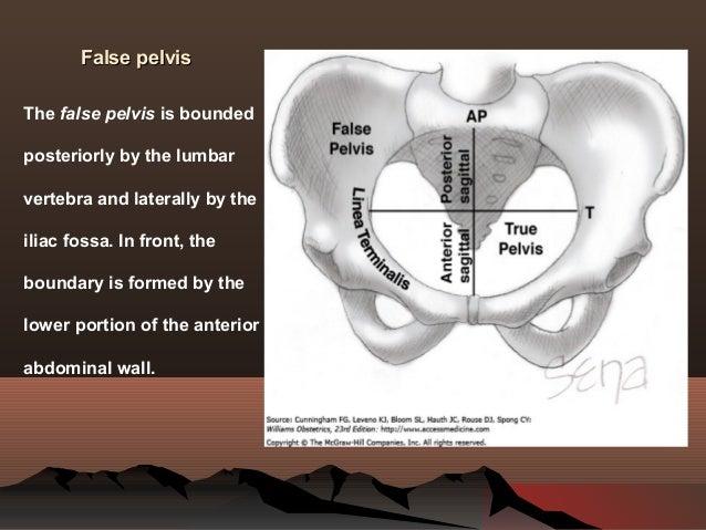 Fetus And Gynaecoid Pelvis