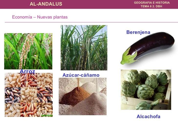 Arroz Azúcar-cáñamo Berenjena Alcachofa Economía – Nuevas plantas