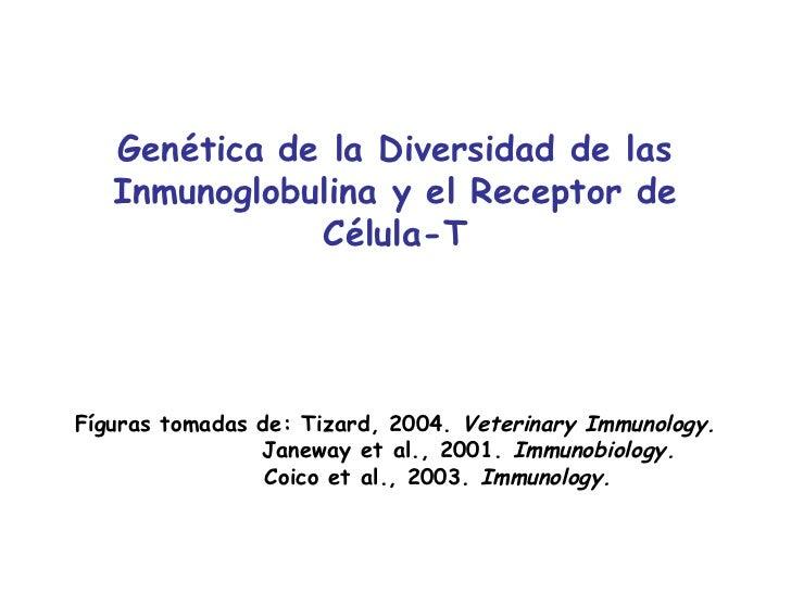 Genética de la Diversidad de las   Inmunoglobulina y el Receptor de              Célula-TFíguras tomadas de: Tizard, 2004....