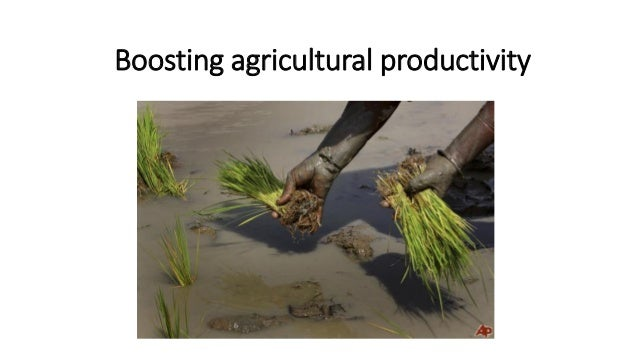 Boosting agricultural productivity