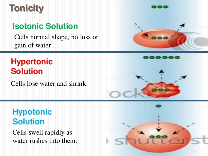 Renal Physiology (VI) - IV fluids (Applied physiology)