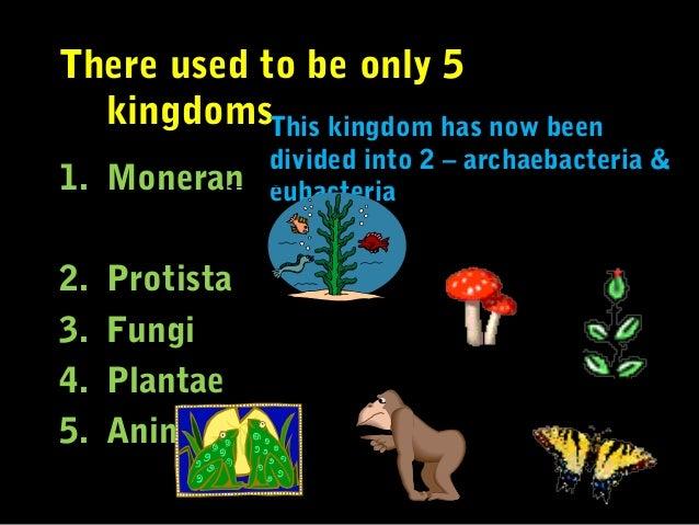 Eukaryotes Plantae Animalia 13 Cell Wall Kingdom