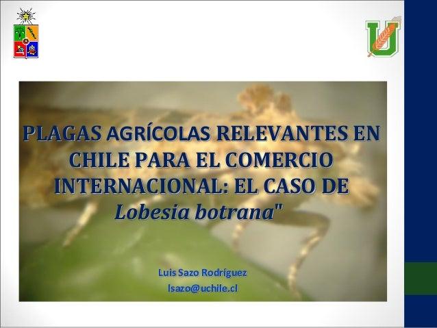 """PLAGAS AGRÍCOLAS RELEVANTES EN CHILE PARA EL COMERCIO INTERNACIONAL: EL CASO DE Lobesia botrana"""" Luis Sazo Rodríguez lsazo..."""