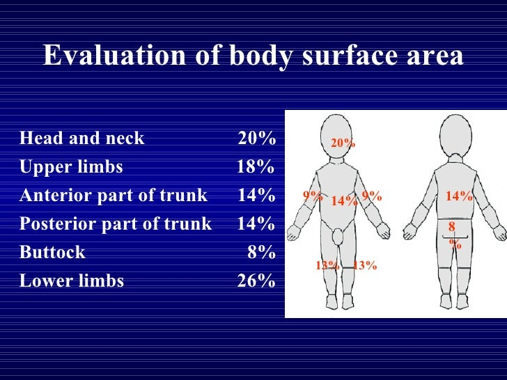 Evaluation of body surface area Head and neck  20% Upper limbs  18% Anterior part of trunk  14% Posterior part of trunk  1...