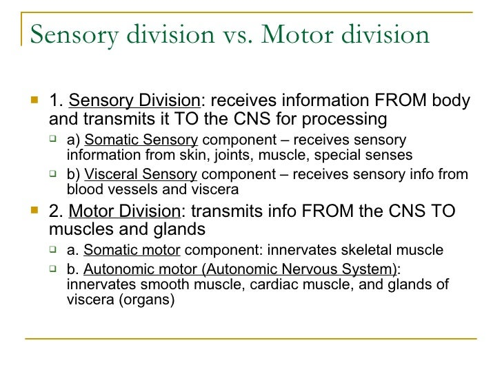 Sensory division vs. Motor division  <ul><li>1.  Sensory Division : receives information FROM body and transmits it TO the...