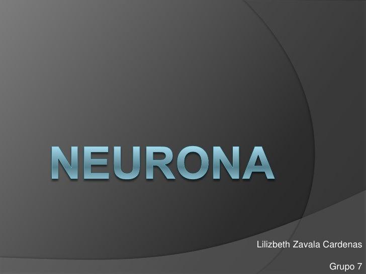 neurona<br />Lilizbeth Zavala Cardenas<br />Grupo 7<br />