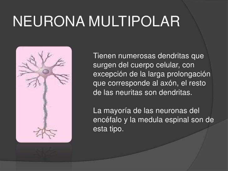 6 neurona