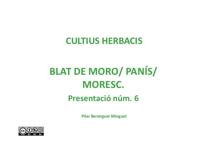 CULTIUSHERBACISBLATDEMORO/PANÍS/      MORESC.   Presentaciónúm.6      PilarBerenguerMinguet
