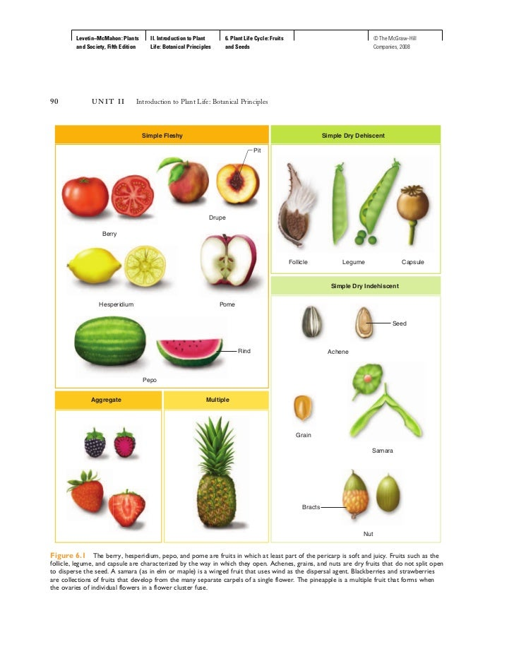 6 Plant Life Cycle Fruits And Seeds on Parts Of A Seed Worksheet