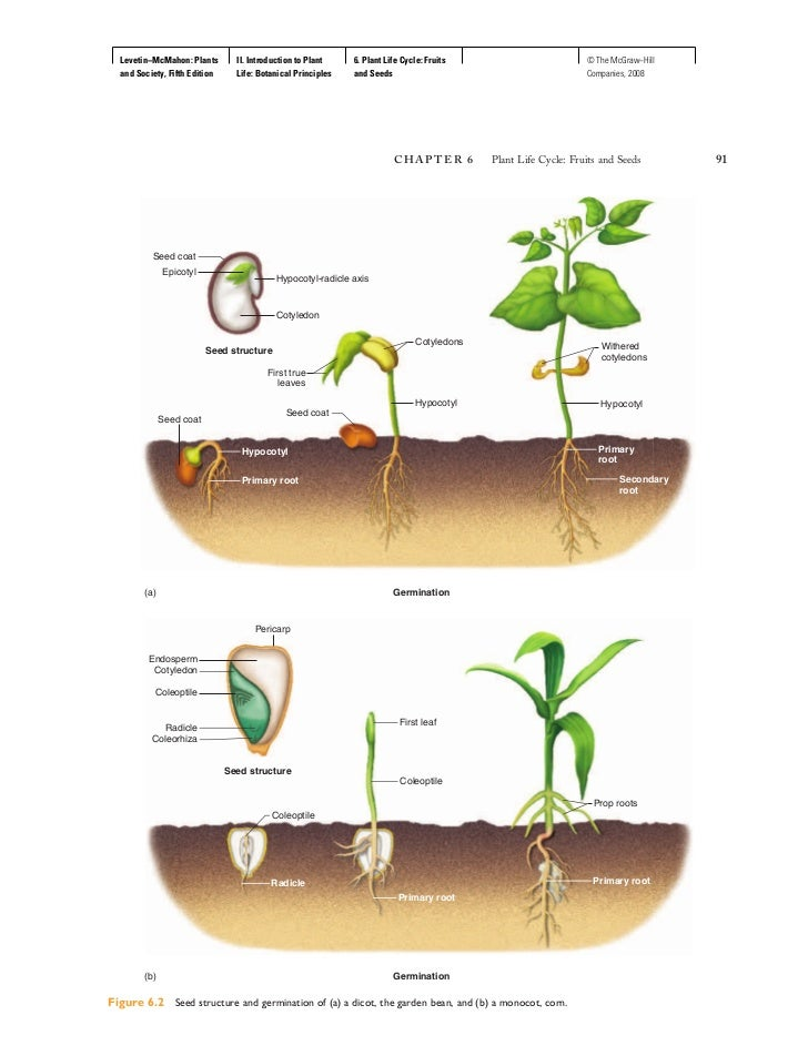 6 plant life cycle fruits and seeds 4 728