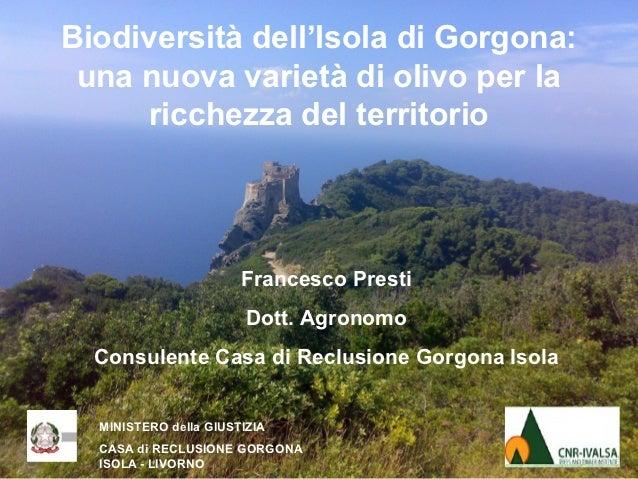 Biodiversità dell'Isola di Gorgona: una nuova varietà di olivo per la     ricchezza del territorio                       F...