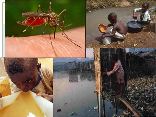what are the problems associated with 1986-2-1 although many popular and technical articles have been published on african bees, there is no credible literature concerning human health problems arising from their stinging behavior.