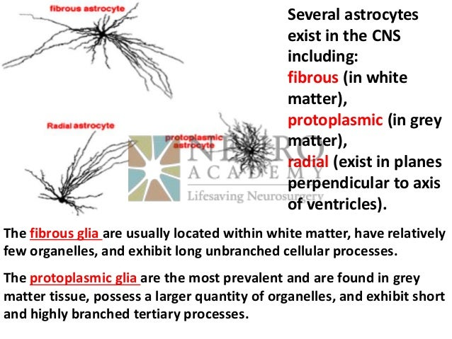 Protoplasmic Astrocytoma: Definition, Molecular Pathogenesis and New  Therapy Targets & Utilization of IHC As a Guidance for Further Genetic  Analysis