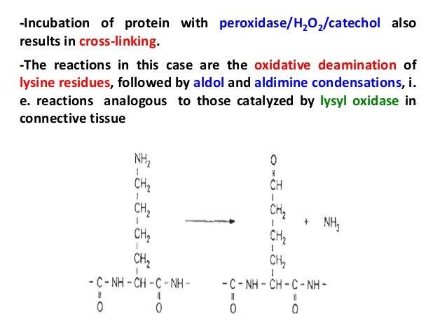 Phenylalanine Deaminase Reaction