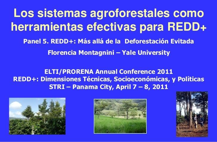 Los sistemas agroforestales comoherramientas efectivas para REDD+   Panel 5. REDD+: Más allá de la Deforestación Evitada  ...