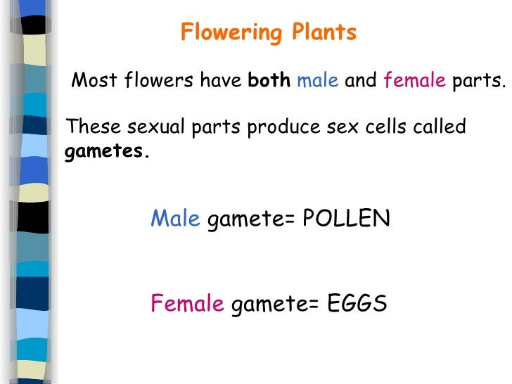 What Are Male Sex Cells Called 30