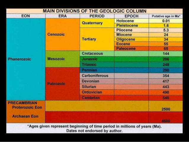 Fossil sorting by the global flood