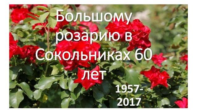 Большому розарию в Сокольниках 60 лет 1957- 2017