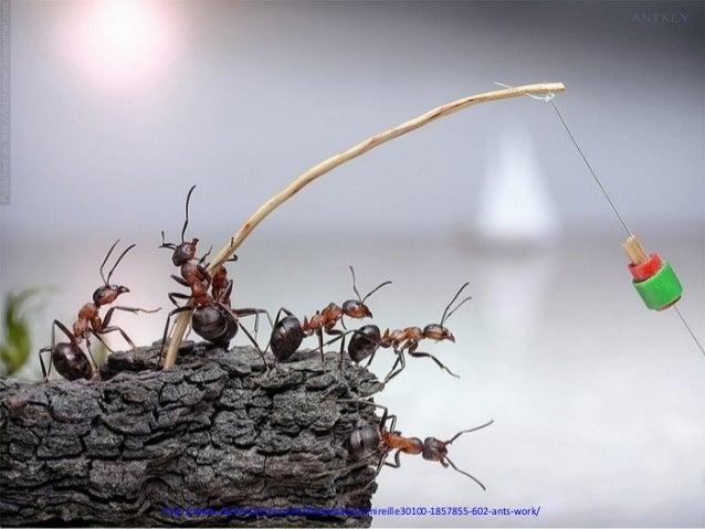 http://www.authorstream.com/Presentation/mireille30100-1857855-602-ants-work/