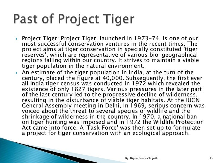 tiger conservation essay Project tiger essay sample safeguard the impressive gains of a focused project like 'project tiger' separate funding for the conservation of tigers.