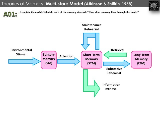 strengths and weaknesses of the multi store Describe and discuss the multi store model for isn't a unitary store new memories however the multi store model emphasised too much on the.