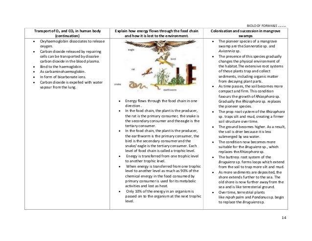 The metamorphosis analysis essay