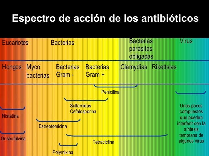 Espectro de acción de los antibióticos Virus Eucariotes Bacterias Bacterias parásitas obligadas Myco bacterias Bacterias G...