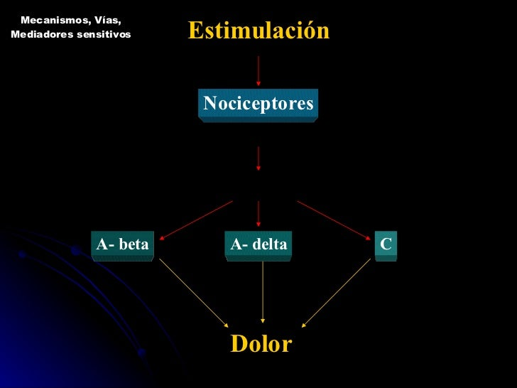 Estimulación Nociceptores Piel, estructuras músculo - esqueléticas y vísceras Axones medula espinal A- beta A- delta C Dol...