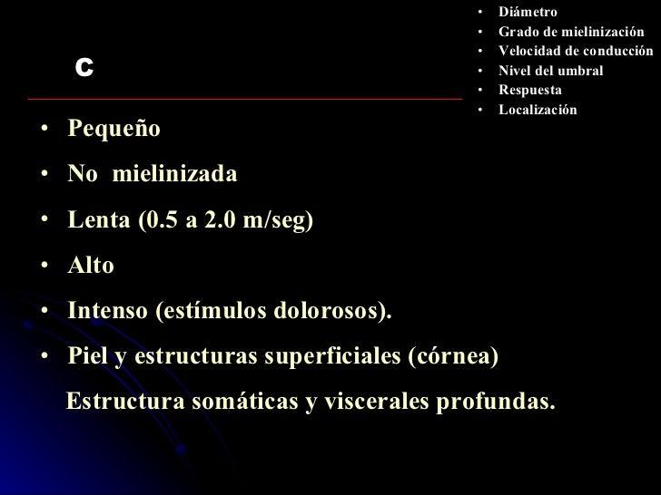 C <ul><li>Pequeño </li></ul><ul><li>No  mielinizada </li></ul><ul><li>Lenta (0.5 a 2.0 m/seg) </li></ul><ul><li>Alto </li>...